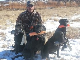 johnny-cash-lady-and-smokey-akc-senior-hunter-title