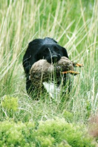 dog-with-bird-in-mouth