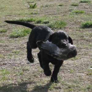 puppy-with-bird-in-mouth