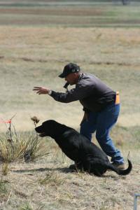 training-a-dog